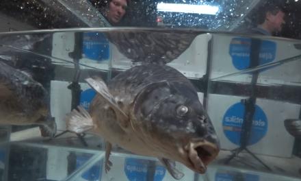 Experimentos: Un pez dentro de nitrógeno líquido