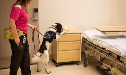 El perro Angus detecta una bacteria en los hospitales