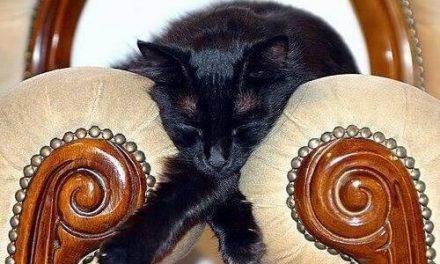 Animalitos que duermen en cualquier sitio