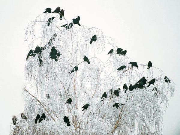 Las Mejores Frases Sobre El Invierno Y El Frío Polar