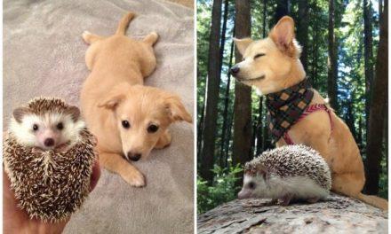 El amor de estos animales al crecer juntos es impresionante
