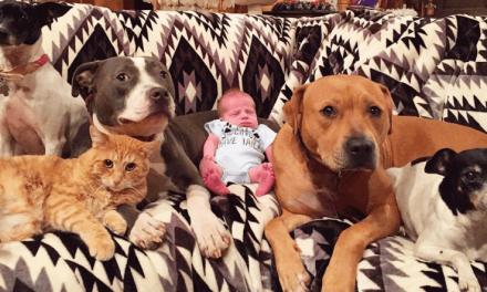 Las niñeras de este bebé son sus mascotas