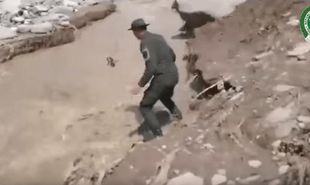 Un policía casi muere al rescatar a un perro que era arrastrado por una corriente