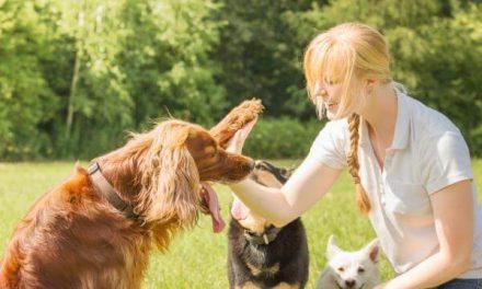 Tips para entrenar a tu perro correctamente