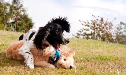 Razones por las que es muy importante jugar con tu perro