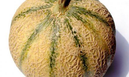 Beneficios muy positivos de comer melón
