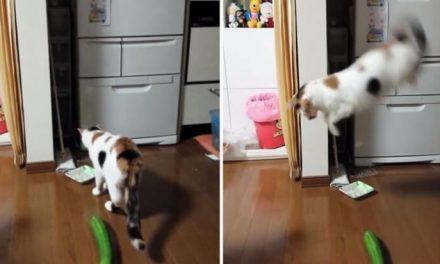 Nunca te atrevas a asustar a tu gato con un pepino