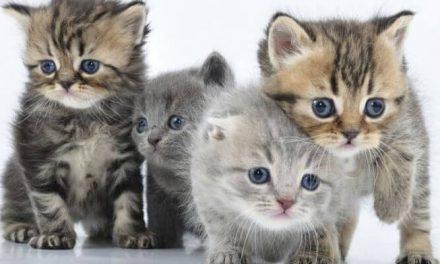 Haz feliz a tu gato con estos accesorios