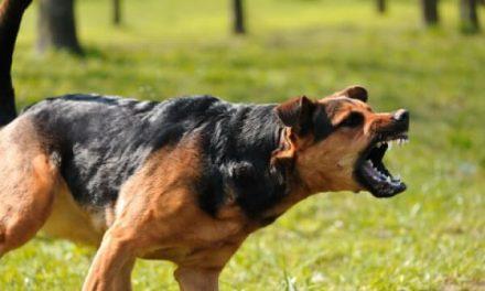 Saber actuar cuando mi perro se pelea con otro perro