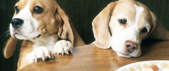 Educa a tu perro para que no te pida comida de la mesa