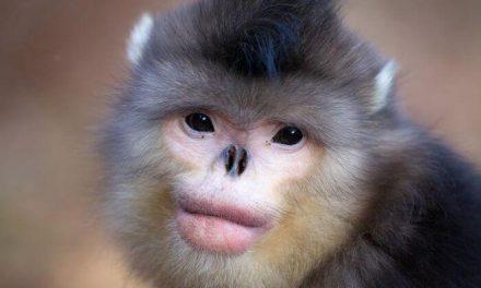 Los animales más raros del mundo