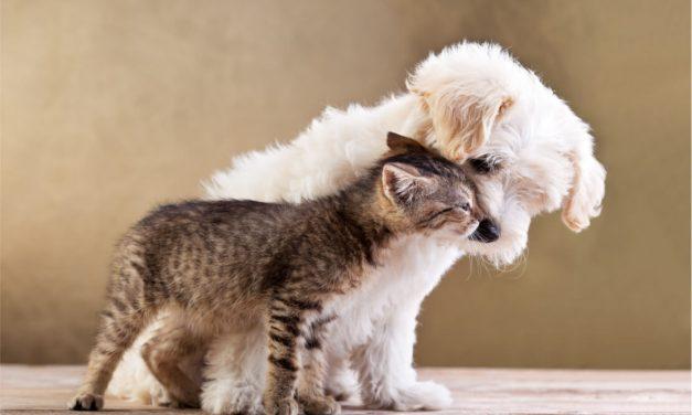 Aprende a que tu perro y gato convivan juntos