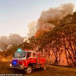 Relief at last: Australia's firegrounds are set to be drenched by heavy rainfall this week – giving hope to exhausted firefighters