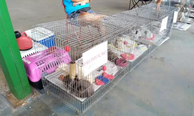 Justiça proíbe venda de animais domésticos em vias públicas do DF